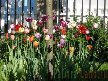 Цветники любого типа: клумба, рабатка, арабеска, миксбордер, бордюр. Многолетники в Вашем саду.