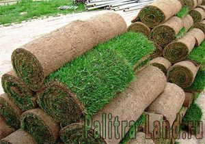 Прайс-лист на рулонный газон